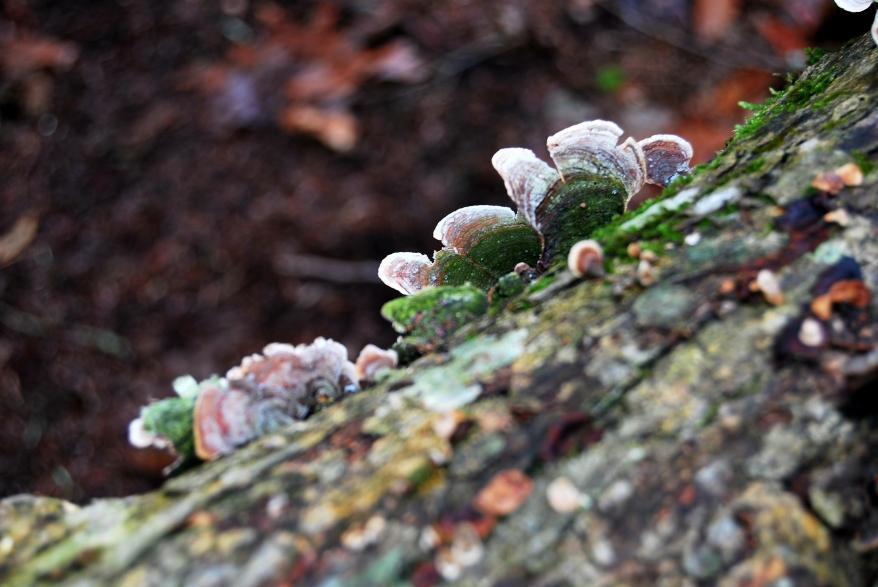 tree moss Tennessee nature